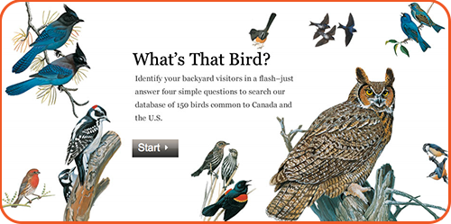 Prepping for the Great Backyard Bird Count | Groovy Lab in ...